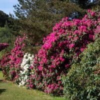 Irland, Killarney National Park, Muckross House und Garten (Foto: Rainer Skrovny, ARR Reisen)