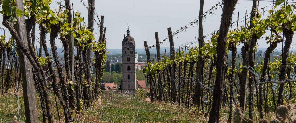 Wachau, Stein (Foto: Christine Emberger, ARR)