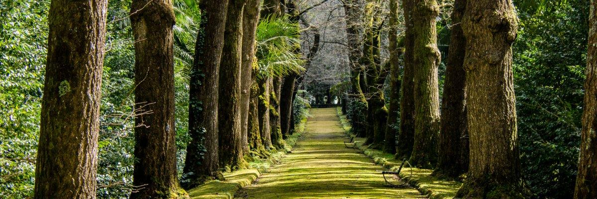 Azoren, Terra Nostra Park (Foto: Rainer Skrovny, ARR Reisen)