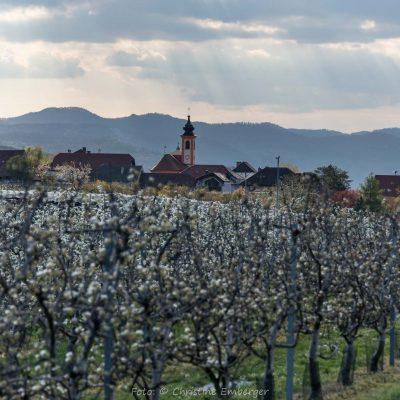 Wachau, Brunnkirchen (Foto: Christine Emberger, ARR Reisen)