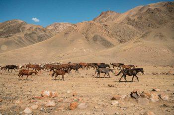Kirgistan (Foto: Michael Weichinger)