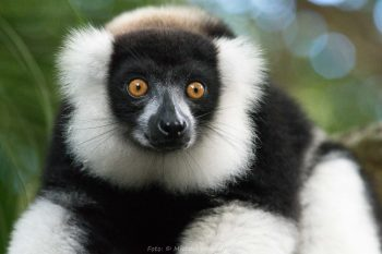 Madagaskar (Foto: Michael Weichinger)