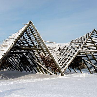 Norwegen, Troms og Finnmark, Trockenfisch (Foto: Christine Emberger, ARR Reisen)