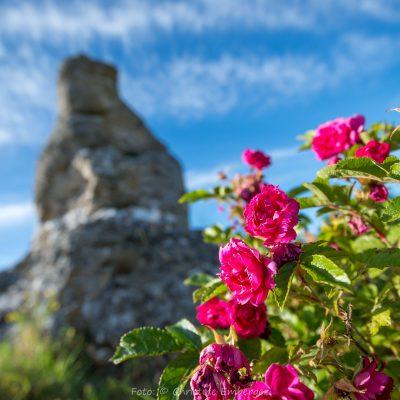 Schweden, Gotland (Foto: Christine Emberger, ARR Reisen)