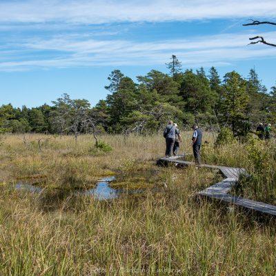 Schweden, Gotland, Moorwanderung (Foto: Christine Emberger, ARR Reisen)