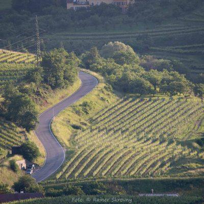 Spitzer Graben, Weingärten (Foto: Rainer Skrovny, ARR Reisen)