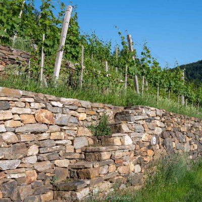 Wachau, Weingärten, Steinmauern (Foto: Rainer Skrovny, ARR Reisen)