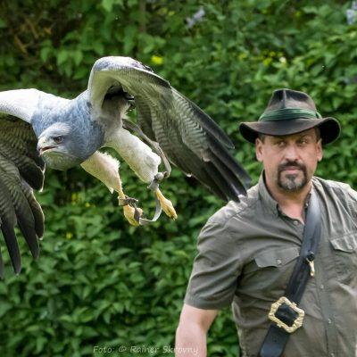 Greifvogelzentrum Schloss Waldreichs (Foto: Rainer Skrovny, ARR Reisen)