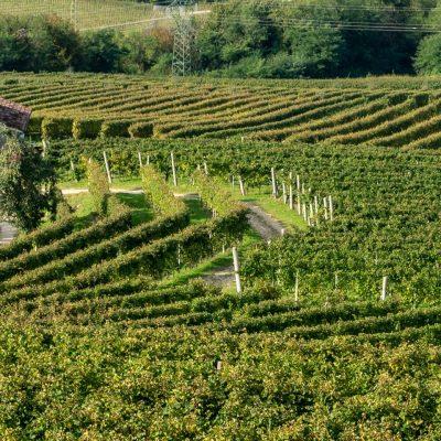 Italien, Landschaft im Prosecco-Gebiet (Foto: Rainer Skrovny, ARR Reisen)
