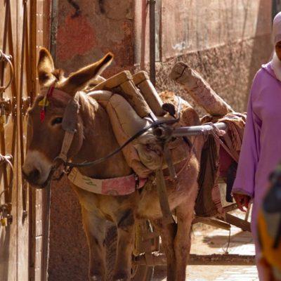 Zurück im Stadtleben von Marrakesch