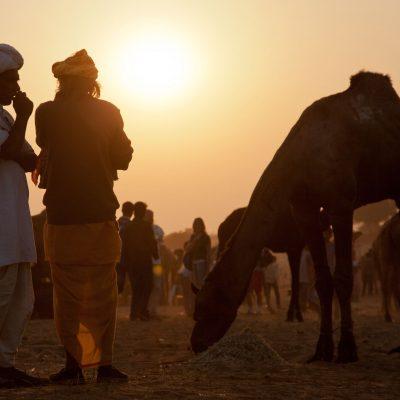 Indien, Pushkar, Kamelmarkt (Foto: Bernhard Brenner)